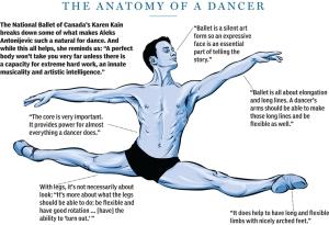 Anatomy of a dancer (Illustration by Chloe Cushman,National Post, from self-portrait by Aleksandar Antonijevic)